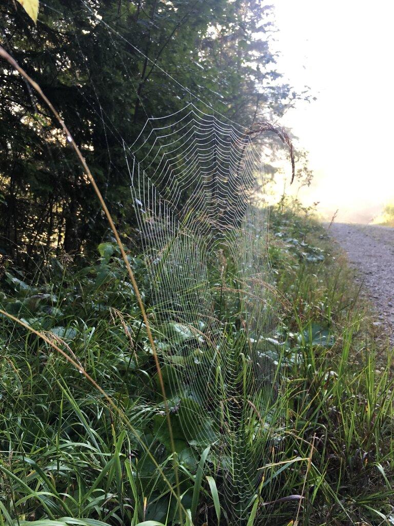 25.08.2017 Tau im Spinnennetz