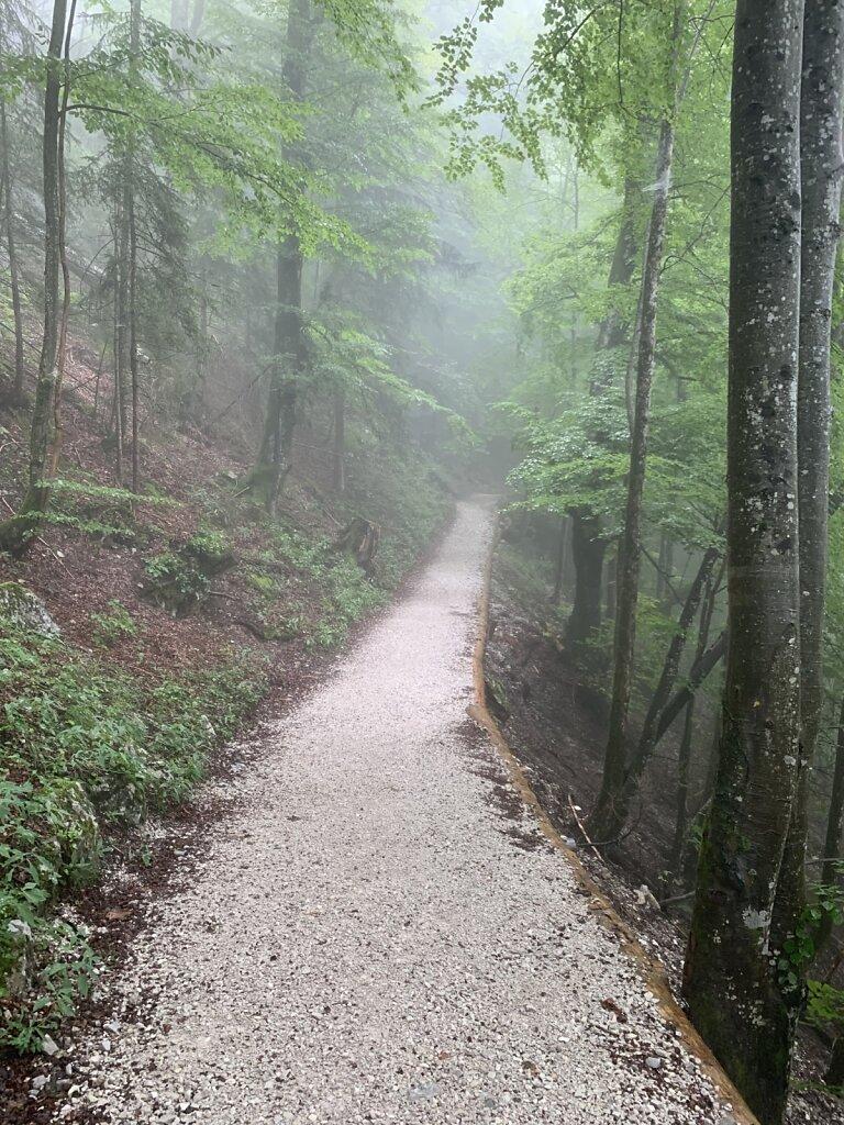 05.08.2021 Im Nebel nach oben