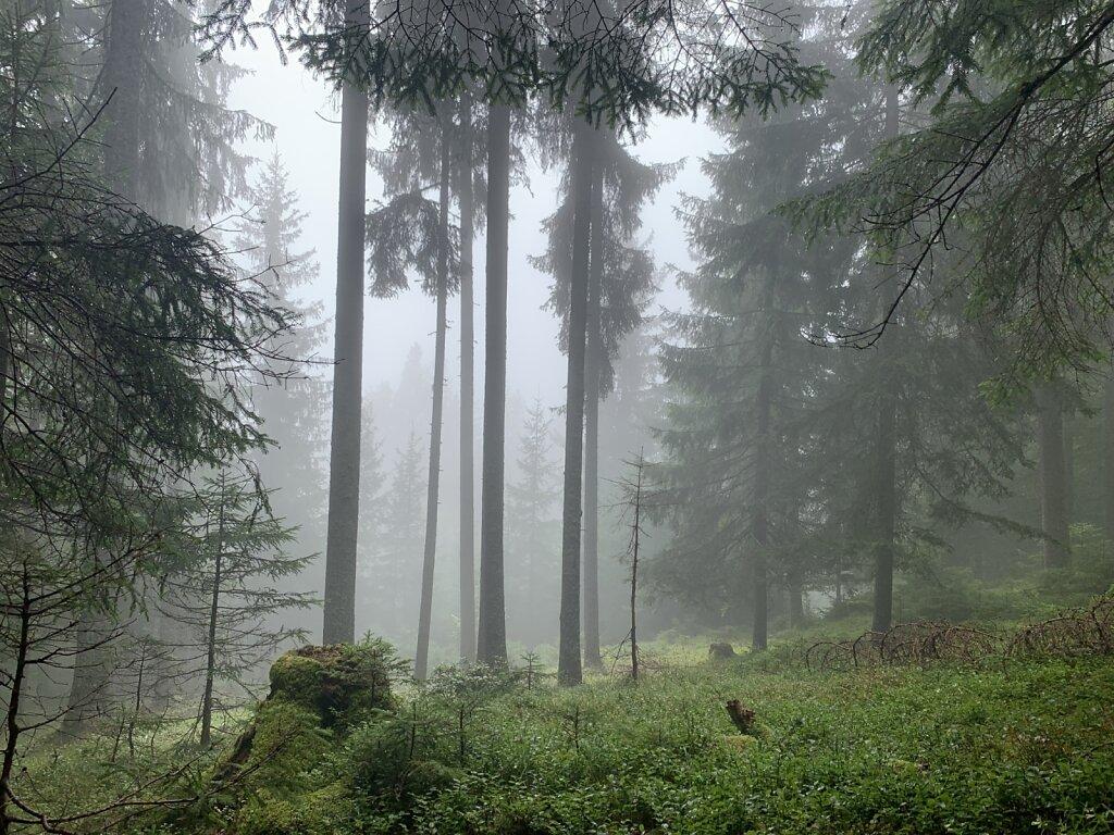16.08.2021 Nebelstimmung im Tal